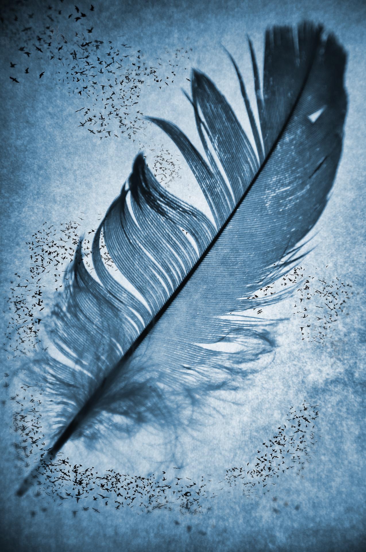 Air fine art photo