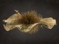 Kiaat-seed
